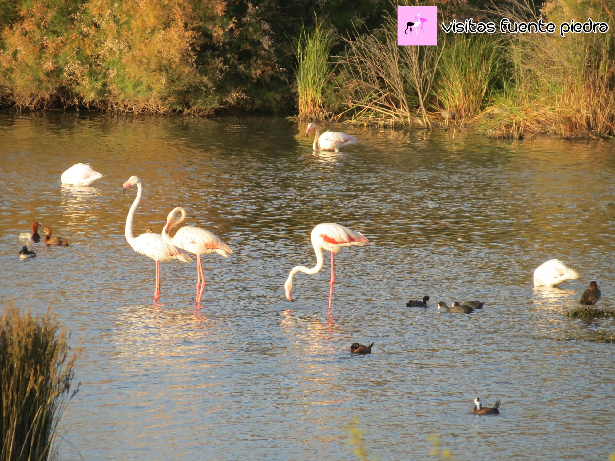 Diversidad de aves en la laguna, Junio de 2020