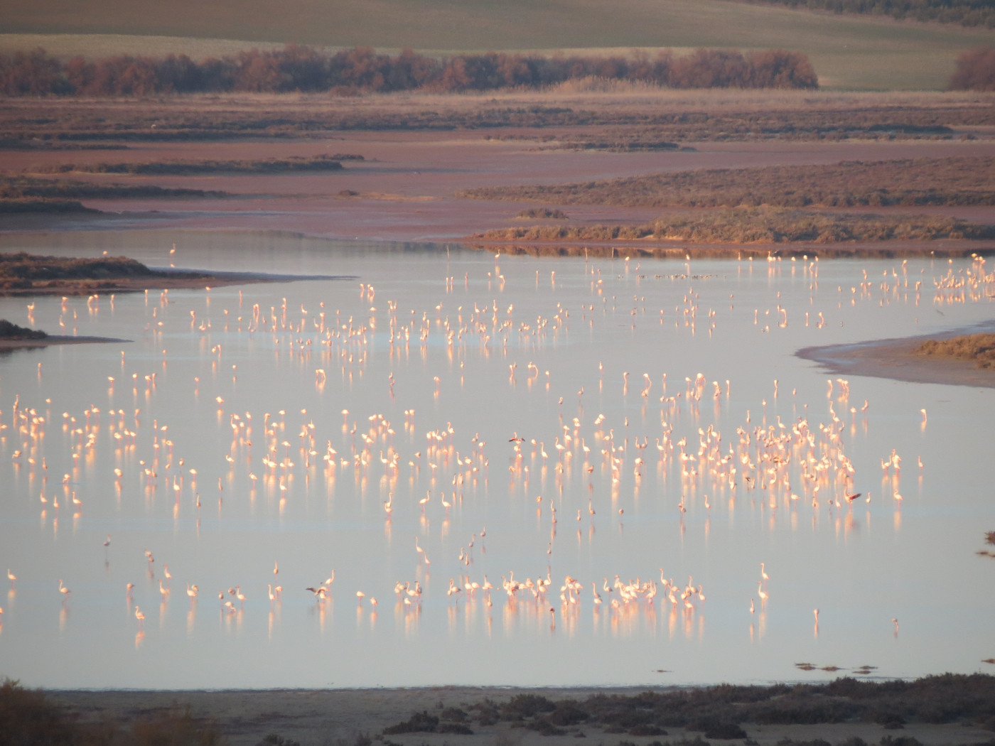 Guided tours at the lake - Flamingos and more