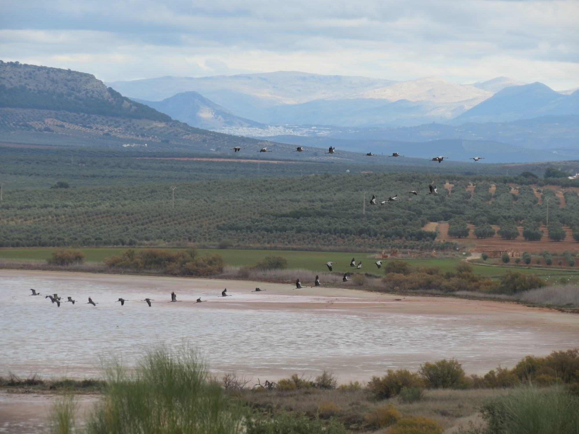 Guided tours at the lake - Flamingos and cranes
