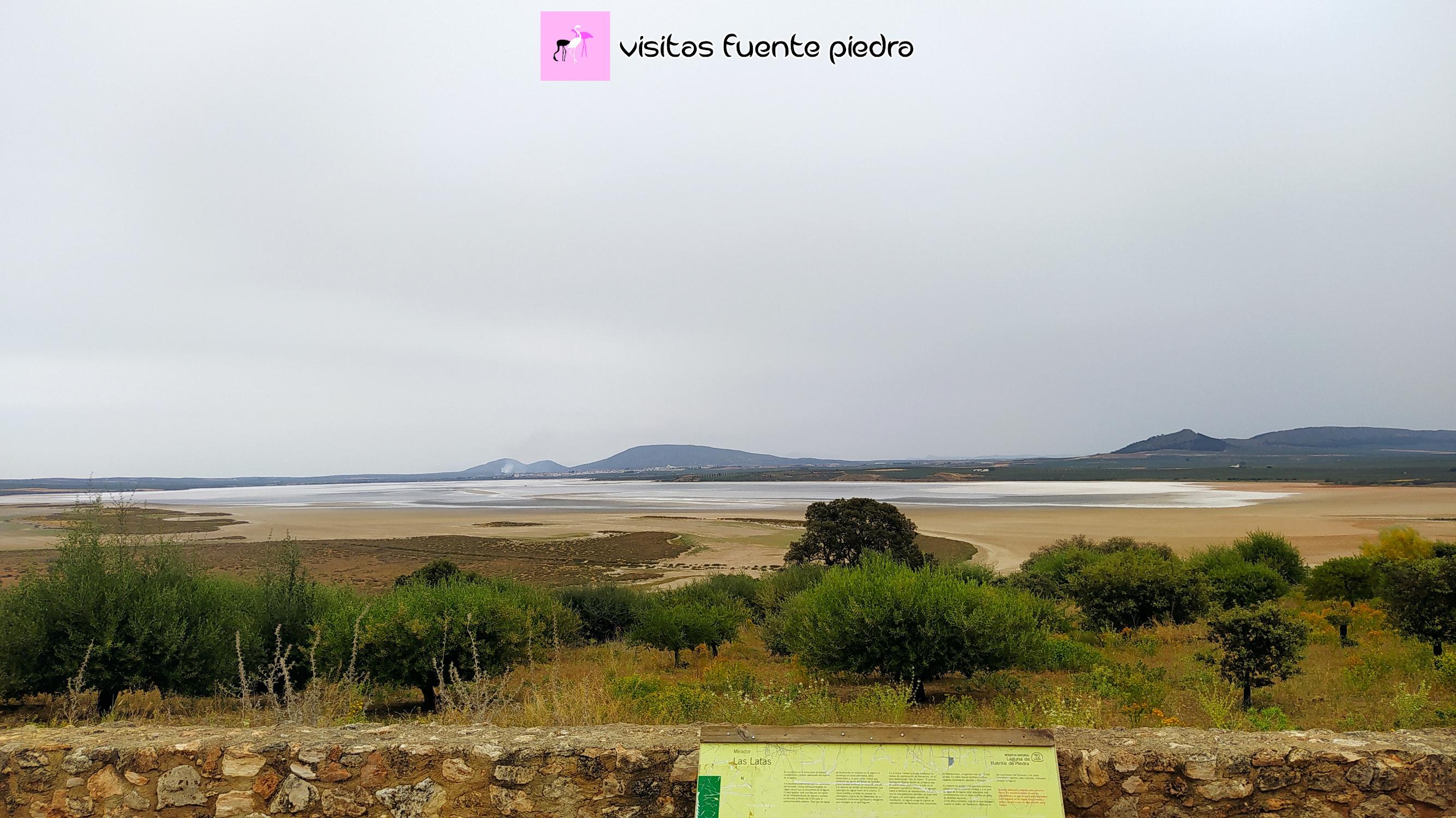 Visitar la Laguna de Fuente de Piedra en verano 2021